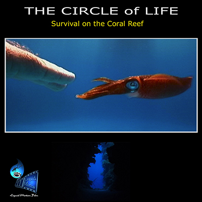 liquid motion film the circle of life