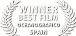 liquid motion film awards spain