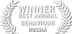 liquid motion film awards russia