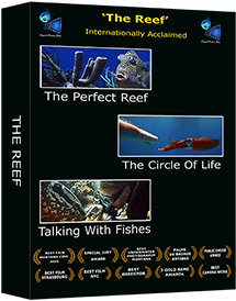 REEF series DVD