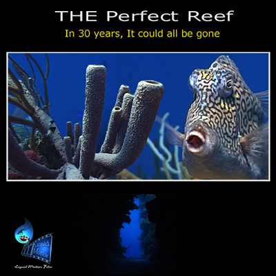 liquid motion film the perfect reef
