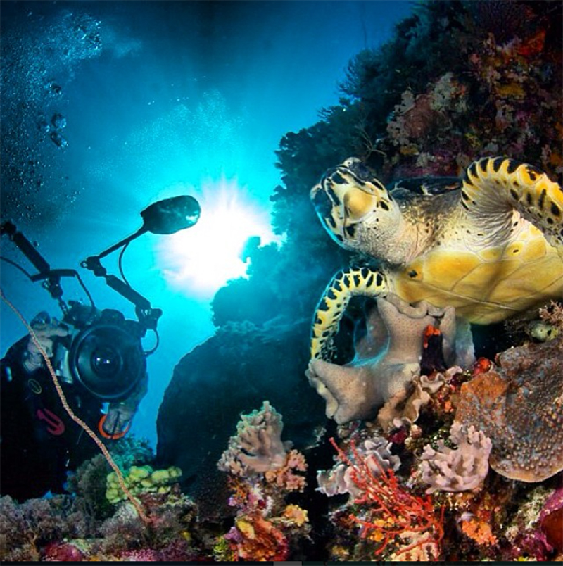 Liquid Motion Underwater Film Production Company - Professional Underwater Film Services, #underwaterfilmservices #underwaterfilmmaking #underwaterfilmcourses #underwaterproductionservices #underwatercameraman, National Geographic, Fox, Underwater Films In Production, the diver